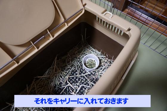ぴょん子180527_02