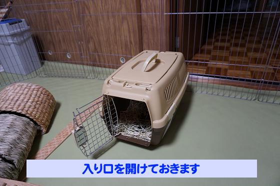 ぴょん子180527_03