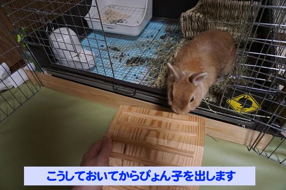 ぴょん子180527_04
