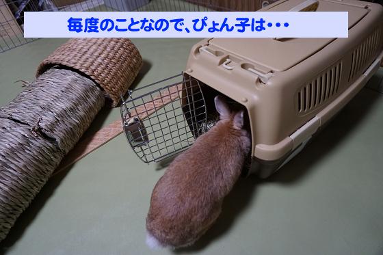 ぴょん子180527_05