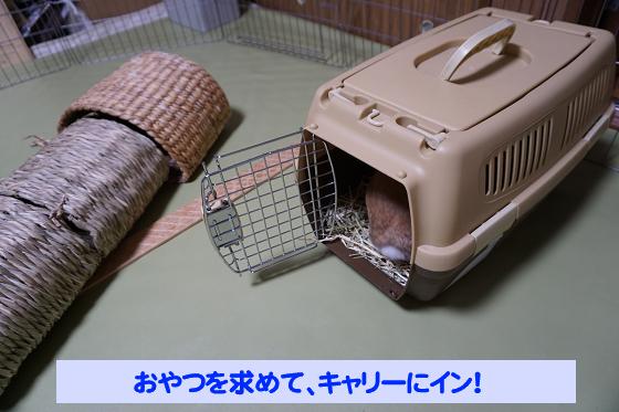 ぴょん子180527_06