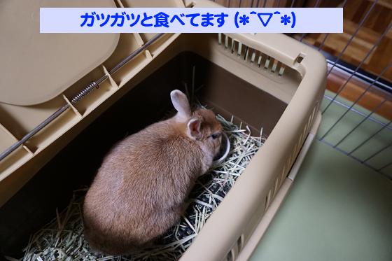 ぴょん子180527_07