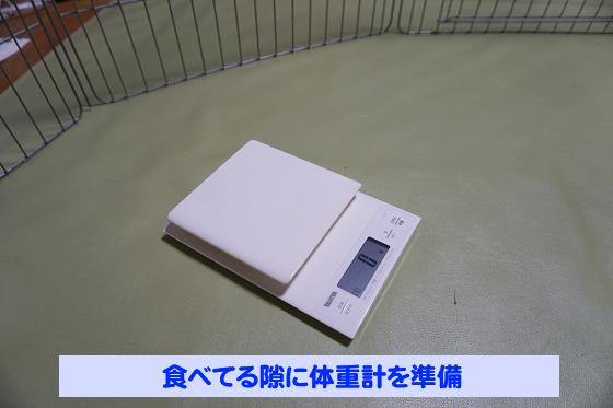 ぴょん子180527_08