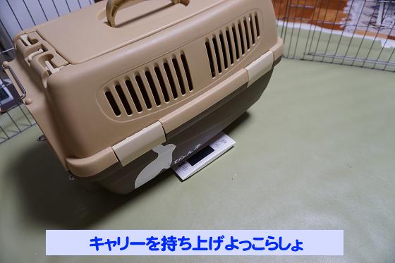 ぴょん子180527_09