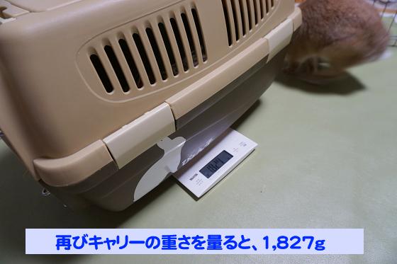 ぴょん子180527_12