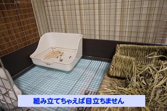 ぴょん子180618_04