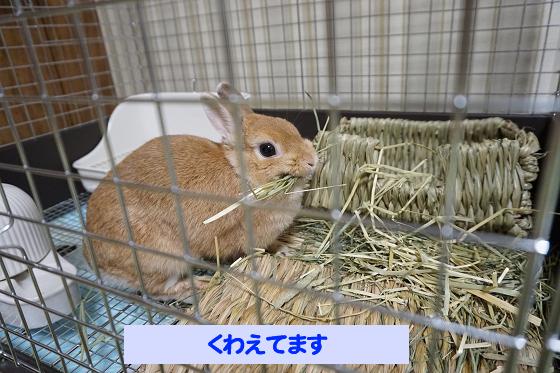 ぴょん子180621_00
