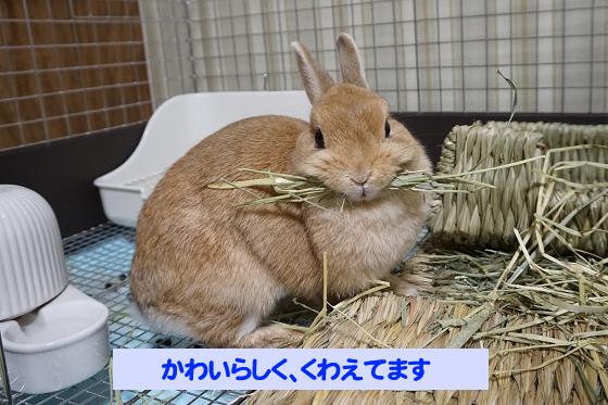 ぴょん子180621_01