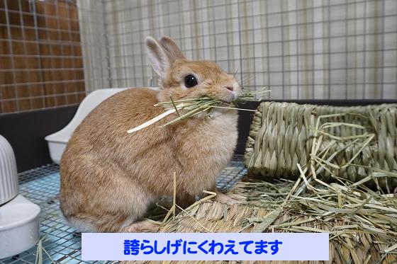 ぴょん子180621_02