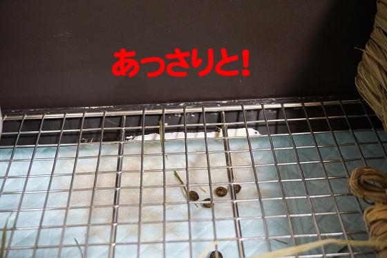 ぴょん子180621_05