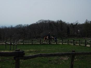 馬に乗ってみた