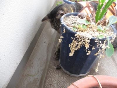 植木鉢の裏の虫