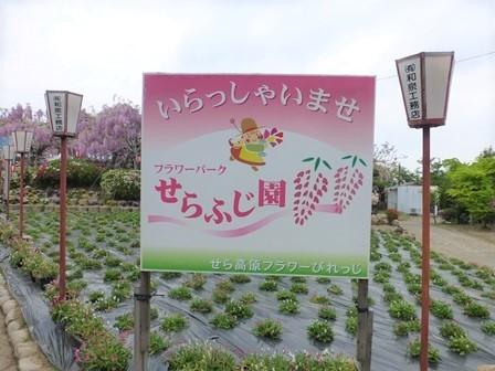 世羅ふじ園12
