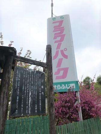 世羅ふじ園30
