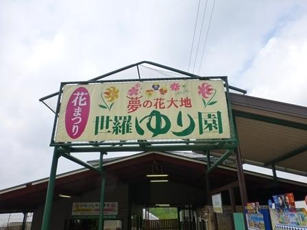 世羅ゆり園3