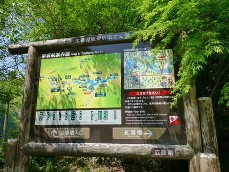 神龍湖櫻橋1