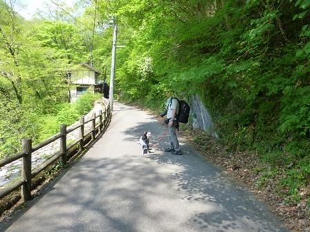 神龍湖櫻橋7