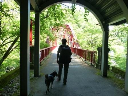 神龍湖櫻橋13