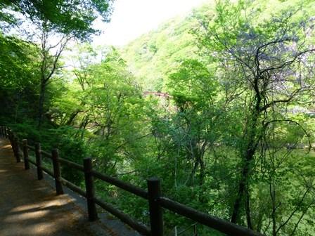 神龍湖櫻橋34