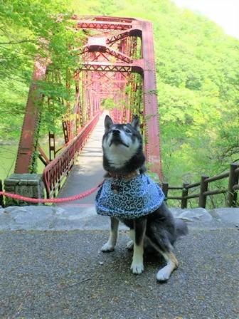 神龍湖櫻橋44