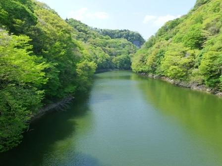 神龍湖櫻橋49