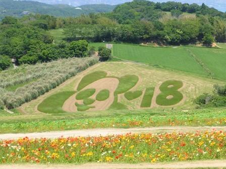 2018あわじ花さじき (27)