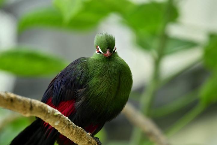 花鳥園レポ4