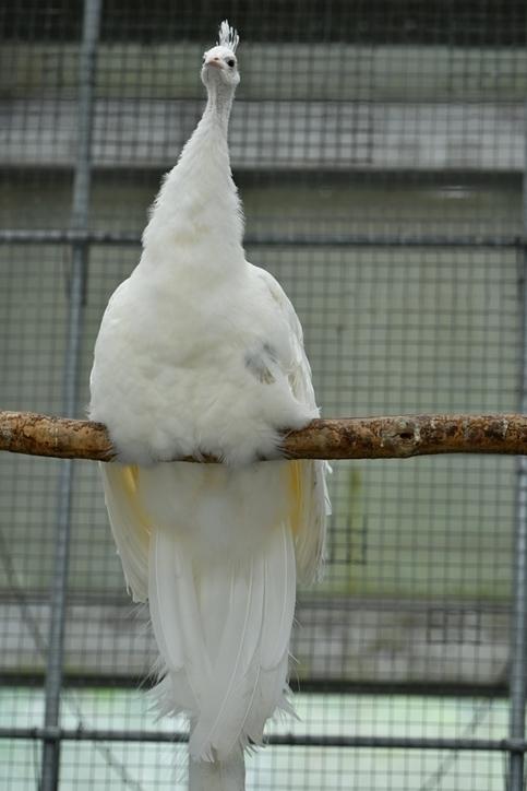 花鳥園レポ5