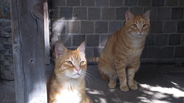 DSC_0169猫
