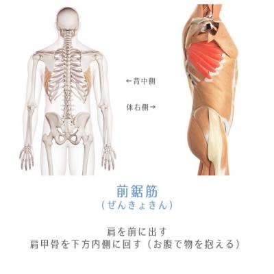 muscle-zenkyokin.jpg