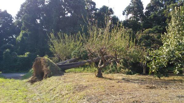 20180906_tree.jpg