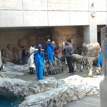 20180324-フンボルトペンギンの餌やり体験 (1)-加工