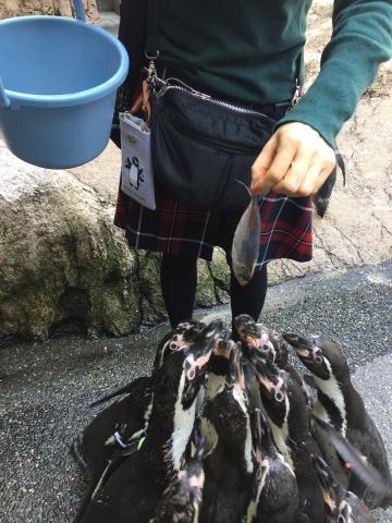 20180324-フンボルトペンギンの餌やり体験 (10)