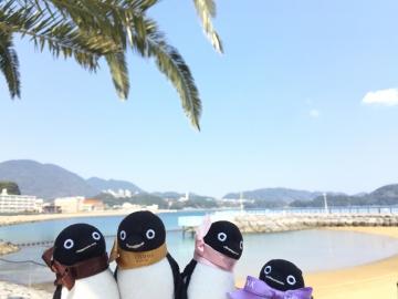 20180424-フンボルトペンギンのタッチング (1)