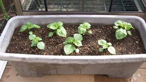 180517aosiso_planter