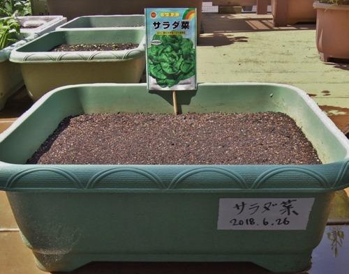 180626salad_lettuce