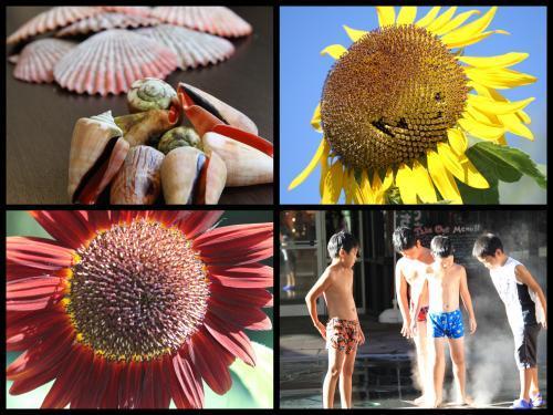 Collage_Fotor0809dr_convert_20180809080915.jpg
