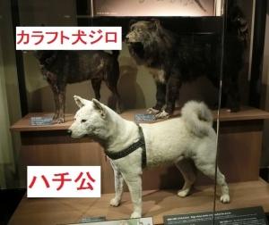 国科学日本19