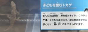 上野西園-18