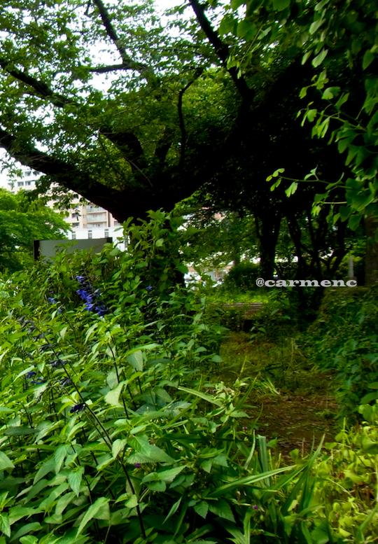 森のような花壇のブルーセージ