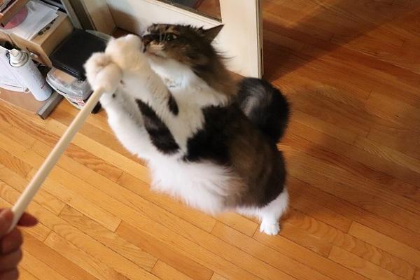 にせ猫の手6