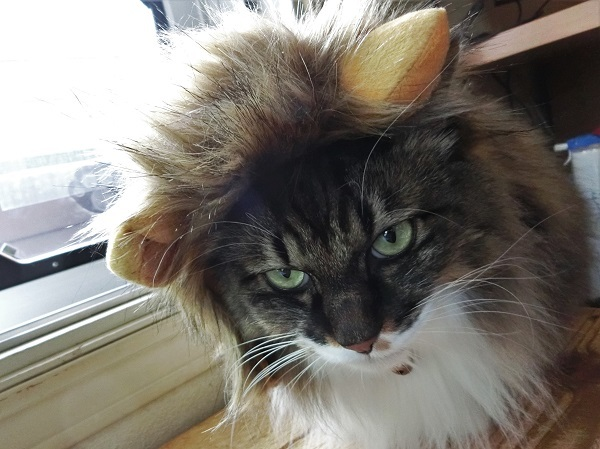 ちびライオン2