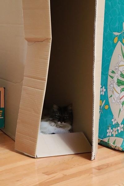 箱のねこ1