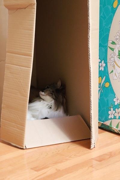 箱のねこ2