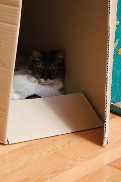 箱のねこ3