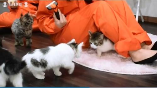 猫の消防署01
