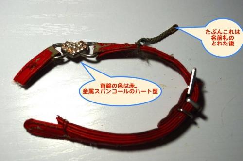 赤い首輪をした迷い猫002