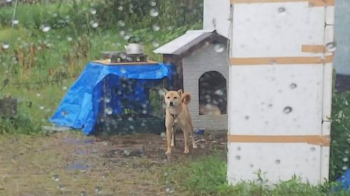 4年間ネグレクトの犬006