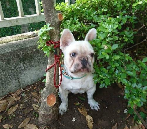 公園の木に縛られ捨てられてワンコ01S
