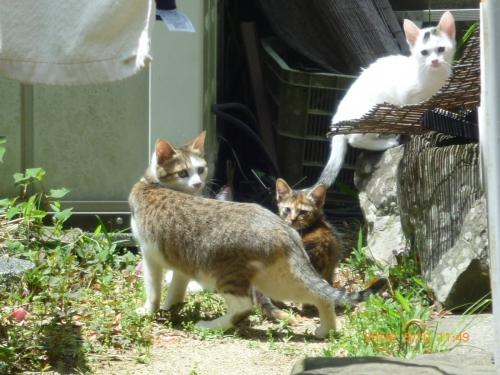 集団捨て猫004